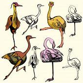 A set of 4 vector illustrations of birds.