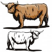 Illustration of a bull.