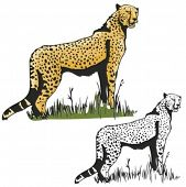 Vector illustration of a leopard.