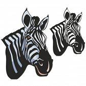 Vector illustration of a zebra.