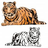 Vector illustration of a tiger.