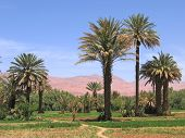 Oasis In The Desert With The Red Mountains In The Background, Tinerhir, Morocco