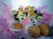 Chickensandeggs1