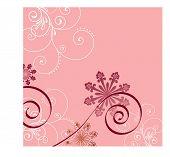 filigree over pink