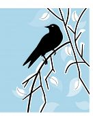 winter bird - black bird on winter branch with leaves