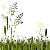 image of bull rushes  - grasses bull - JPG