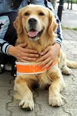 stock photo of seeing eye dog  - Dog and master - JPG