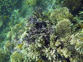 Corals And Fish, Great Barrier Reef, Australia