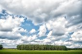 Forest And Green Field Nature Landscape On Cloudy Day. Sky With Lot White Clouds Above Forest Trees. poster