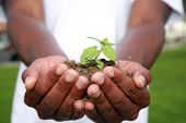 foto of environmentally friendly  - a green plant safe in the palms of a persons hands - JPG