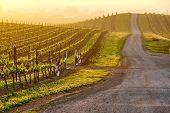 Vineyards landscape at sunrise in California, USA poster