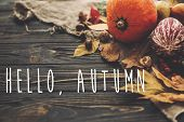Hello Autumn Text. Hello Fall Sign On Beautiful Pumpkin, Autumn Vegetables With Colorful Leaves,acor poster