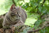 Azul tabby felino em uma árvore