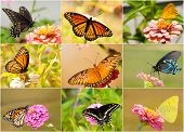 Collage of bright, colorful butterflies with garden backgrounds