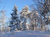 Heawy snow in wood