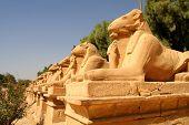 Avenue of ram-headed sphinxes