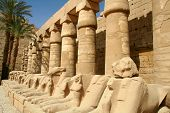 Ram-headed sphinxes deposited in the first court in Temple of Karnak, Egypt