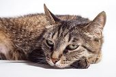 Very Sad Cat Lies On A White Background poster