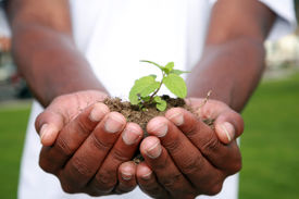 picture of environmentally friendly  - a green plant safe in the palms of a persons hands - JPG