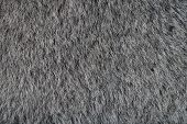 Animal Gray Fur Texture