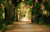 Fantasy Walk