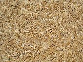 Grass Seed Background