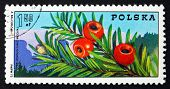 Postage Stamp Poland 1975 Yew Branch With Berries