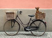 stock photo of curio  - Detail of a parking bicycle with two basket with a chihuahua little dog inside of one of them - JPG