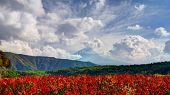 Mount Fuji in the distance behind flowers.