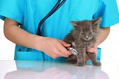 picture of compassion  - Veterinarian examining kittens isolated on white - JPG