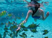 Young woman snorkeling in a tropical sea and feeding fish