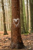 Heart On Tree