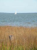 Sailboat Near The Marsh
