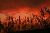 Seaoat Sunset