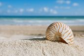 picture of shells  - small nautilus shell  with ocean  - JPG