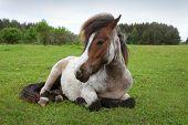 beautiful pony on the field