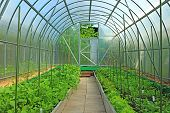 stock photo of greenhouse  - The vegetable greenhouses made of transparent polycarbonate - JPG