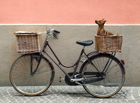 image of curio  - Detail of a parking bicycle with two basket with a chihuahua little dog inside of one of them - JPG