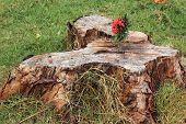 Flower Spike On The Stump