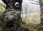 picture of oz  - Tree with face in the Land of Oz - JPG