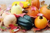 Thanksgiving (harvest) Decoration