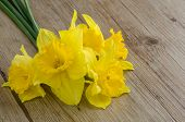 stock photo of jonquils  - Closeup detail of yellow jonquil flowers on wooden background - JPG