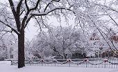 Holiday Winter Snow Scene.