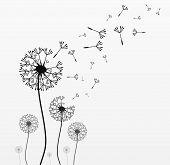 Seven vector dandelions