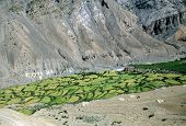 stock photo of himachal  - Traditional himalayan terraced fields in Spiti valley Himachal Pradesh India - JPG