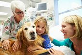 foto of working animal  - Young Girl Being Visited In Hospital By Therapy Dog - JPG