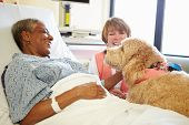 foto of geriatric  - Pet Therapy Dog Visiting Senior Female Patient In Hospital - JPG