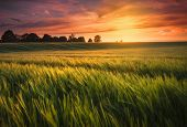 picture of farm land  - The sun sets over a green and gold - JPG
