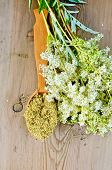 stock photo of meadowsweet  - Wooden spoon with dried flowers of meadowsweet a bouquet of fresh flowers of meadowsweet on a wooden boards background - JPG