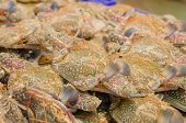 foto of blue crab  - Fresh raw flower crab or blue crab in seafood market - JPG